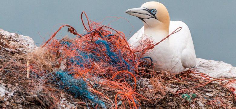 safety-net-3289548_1280 (Schockierende Botschaft des WWF)