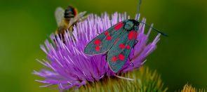 nature-3481966_1280 (Nach wie vor aktuell: das Sterben der Insekten)