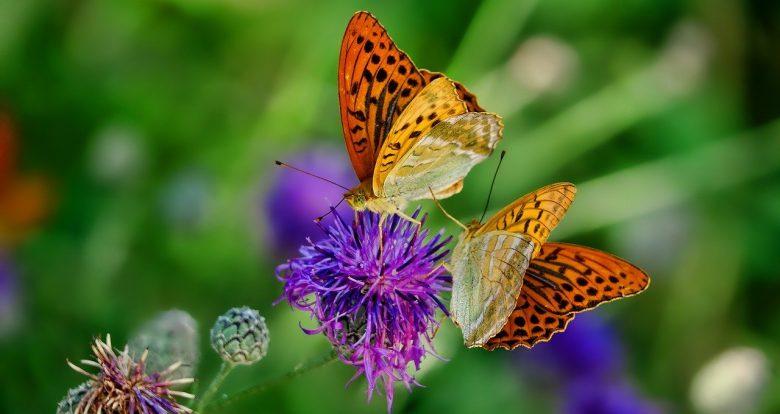 nature-3205038_1280 (Von 1989 bis 2016 etwa 75% weniger Insekten!)