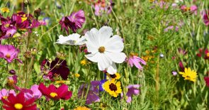 """flower-meadow-3598562_1280 (Info-Flyer Natur- und Umweltschutzakademie """"nua"""")"""