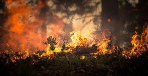 forest-fire-2268729_1280 (Deutschland's Klimabeitrag enttäuscht viele Länder)