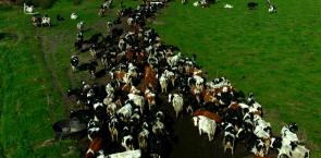 systemmilch (Dokumentation: Das System Milch)