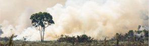 regenwald2019 (Die Zerstörung des Regenwaldes nimmt apokalyptische Ausmaße an)
