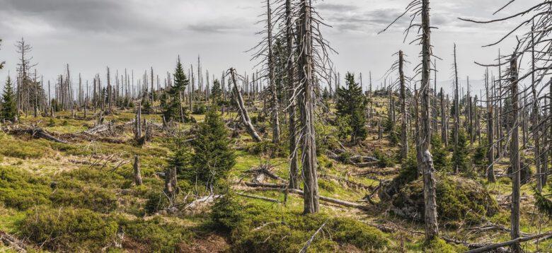 bavarian-forest-3385966_1280 (Wald der Zukunft in Much)