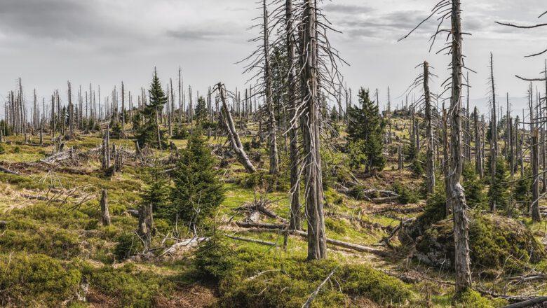 bavarian-forest-3385966_1280