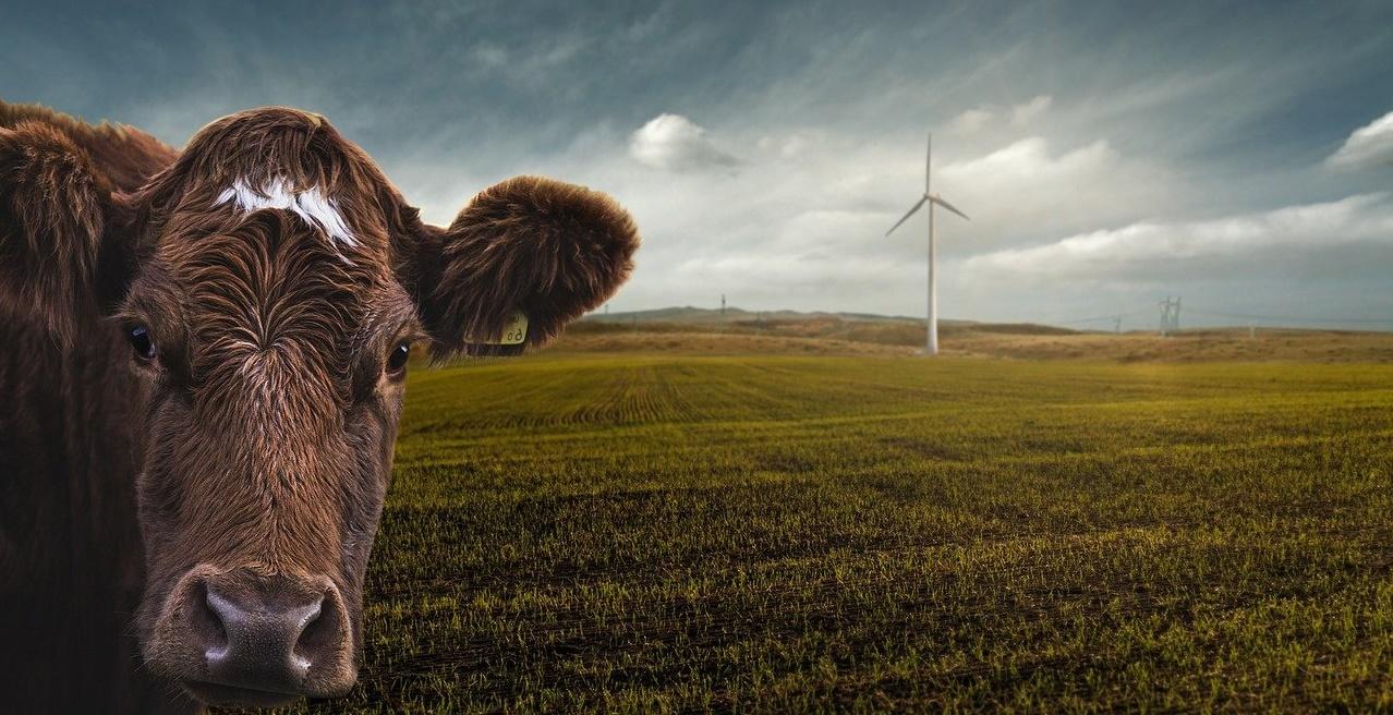 renewable-energy-4176010_1280 (CDU-Kommentar zum Ausschuss Umwelt- und Klimaschutz)