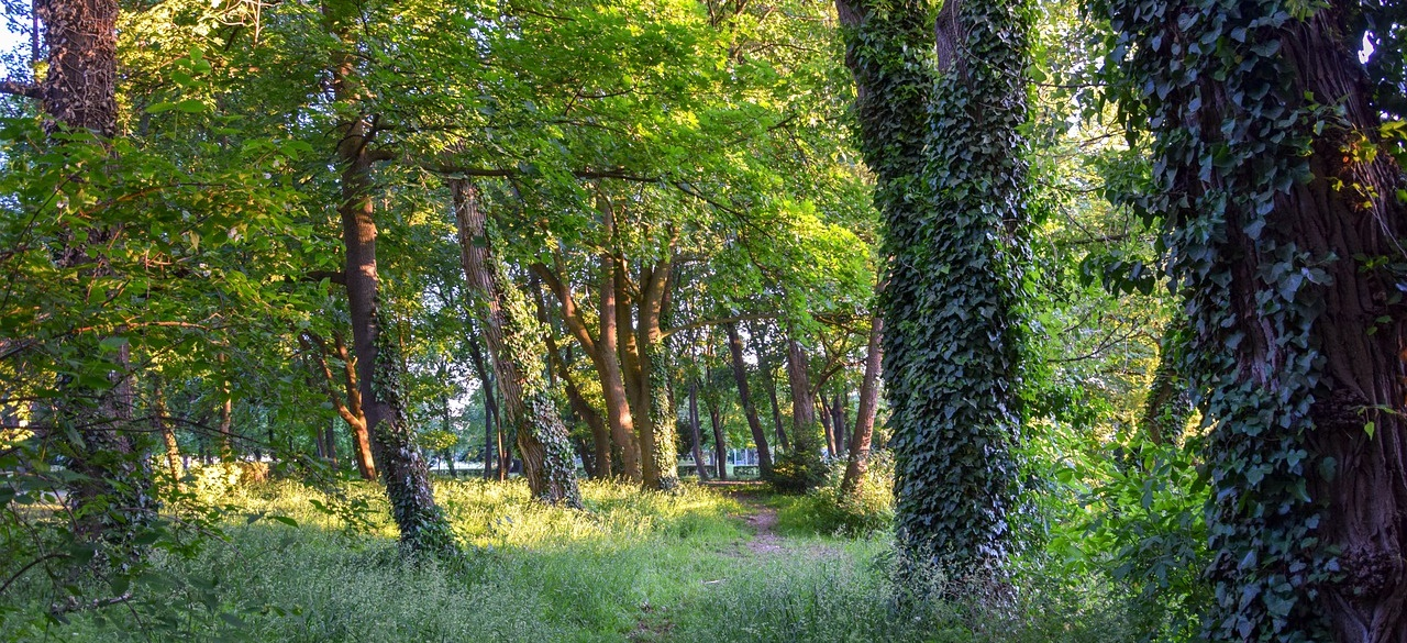 trees-5645757_1280-1 (Der Wald fordert unseren Einsatz)