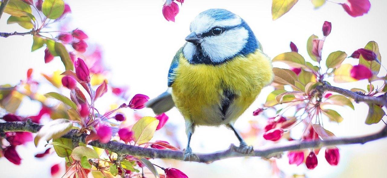 spring-bird-2295434_1280 (Umwelt und Artenschutz vor der eigenen Tür)